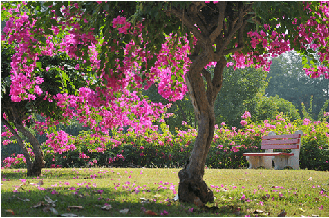 Parks and Gardens In Chandigarh That You Must Visit