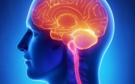Meningioma- All You Want To Know About This